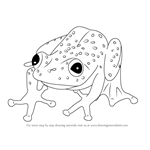 How to Draw a Bobiri Reed Frog