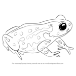 How to Draw a Cape Mountain Toad