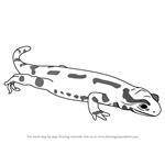How to Draw a Fire Salamander