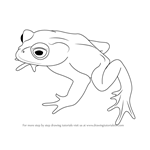 How to Draw a Golden Toad