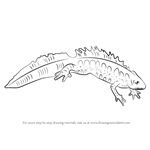 How to Draw a Great Crested Newt