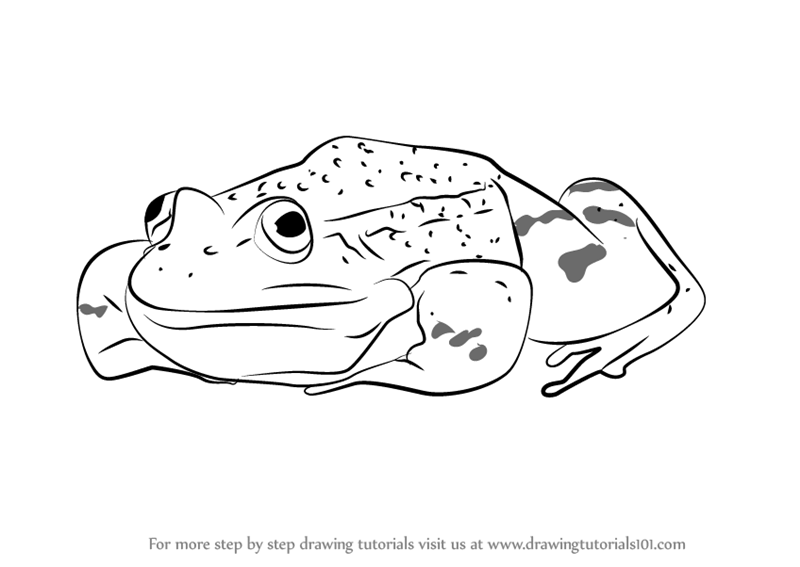 Learn How to Draw a Green Frog Sitting (Amphibians) Step ...