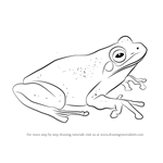 How to Draw a Green Tree Frog
