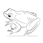 How to Draw a Lemon-Yellow Tree Frog