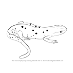 How to Draw a Newt
