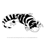 How to Draw a Tiger Salamander