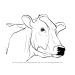How to Draw a Cow Face
