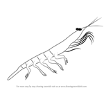 How to Draw a Antarctic Krill