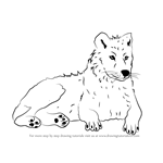 How to Draw an Arctic Wolf
