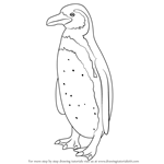 How to Draw a Humboldt Penguin