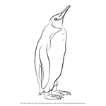 How to Draw a King Penguin