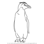 How to Draw a Macaroni Penguin
