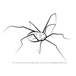 How to Draw a Harvestman