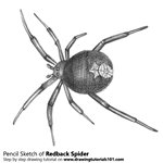 How to Draw a Redback spider