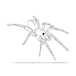 How to Draw a Woodlouse Spider
