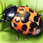How to Draw a Harlequin Ladybird