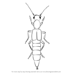 How to Draw a Rove Beetle