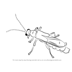 How to Draw a Soldier Beetle