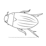 How to Draw a Water Beetle