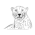 How to Draw a Cheetah's Face