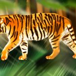 How to Draw a Siberian Tiger