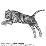 How to Draw a Tiger Jumping