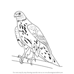How to Draw a Northern Goshawk