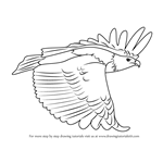 How to Draw a African Fish Eagle in Flight