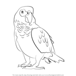 How to Draw an African Grey Parrot