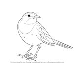 How to Draw an African pied wagtail