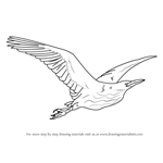 How to Draw an American Bittern in Flight