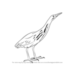 How to Draw an American Bittern