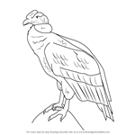 How to Draw an Andean condor