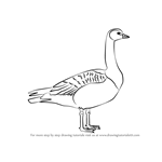 How to Draw a Barnacle Goose