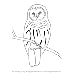 How to Draw a Barred Owl
