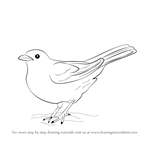 How to Draw a Blackbird