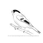How to Draw a Bullfinch