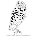 How to Draw a Burrowing Owl