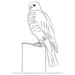 How to Draw a Buzzard
