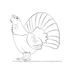 How to Draw a Capercaillie