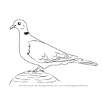 How to Draw a Collared Dove