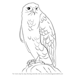 How to Draw a Common Buzzard