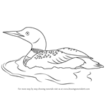 How to Draw a Common Loon