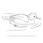 How to Draw a Common Merganser