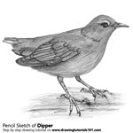 How to Draw a Dipper