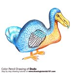 How to Draw a Dodo