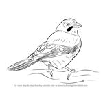 How to Draw a Eurasian Jay