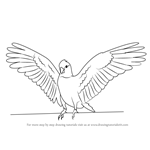 How to Draw a Galah