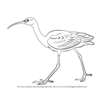 How to Draw a Glossy Ibis