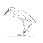 How to Draw a Great Egret